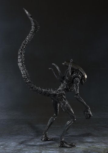 Image 3 for Alien Vs Predator - Alien Warrior - S.H.MonsterArts (Bandai)