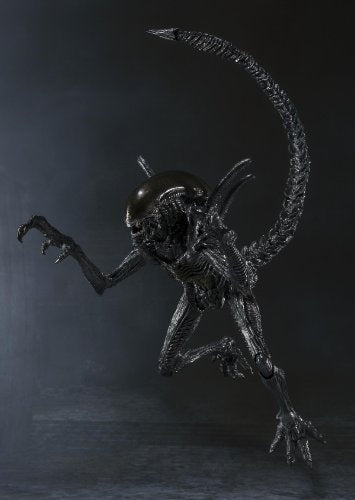 Image 10 for Alien Vs Predator - Alien Warrior - S.H.MonsterArts (Bandai)