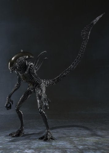 Image 2 for Alien Vs Predator - Alien Warrior - S.H.MonsterArts (Bandai)