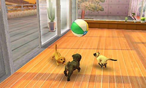 Image 3 for Nintendogs + Cats: Shiba & New Friends (Happy Price Selection)