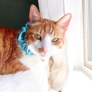 Blossoming Blue Scrunchie Cat Collar