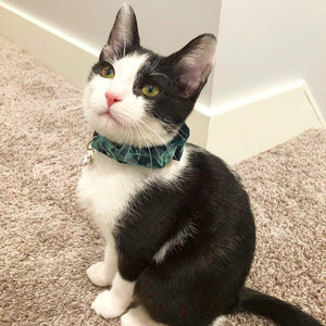 Emerald Green Velvet Scrunchie Cat Collar