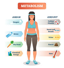 How Sleep Affects Your Metabolism