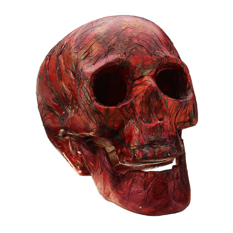 Bloody Gory Human Skeleton Head With Colour Lights