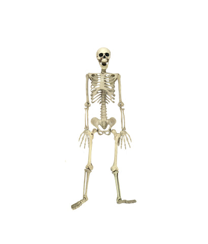 88cm Poseable Human Skeleton