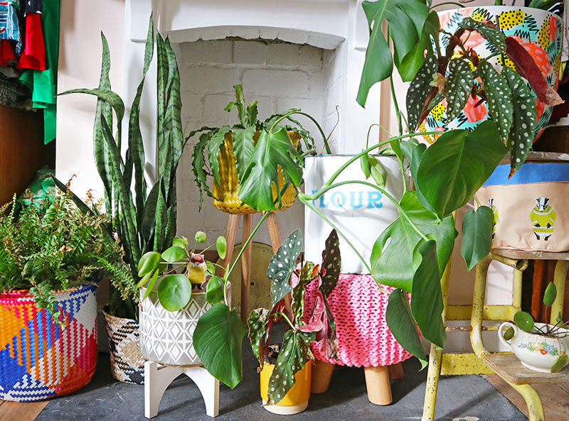 My top 5 house plants (for a plant killer)