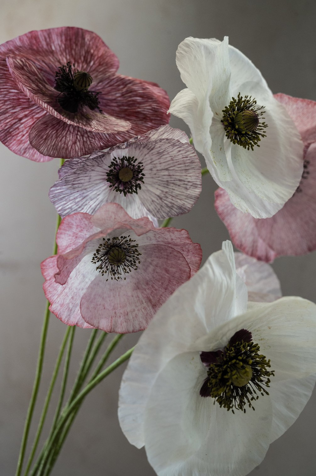 "Mohn ""Mother of Pearl"""
