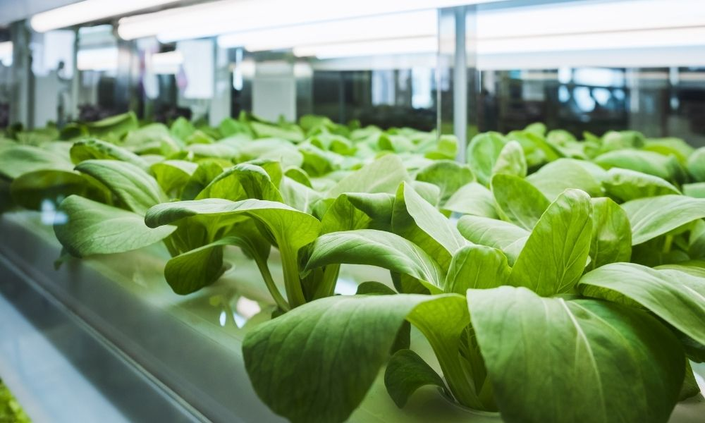 Guide To Sanitizing and Sterilizing Your Hydroponic System