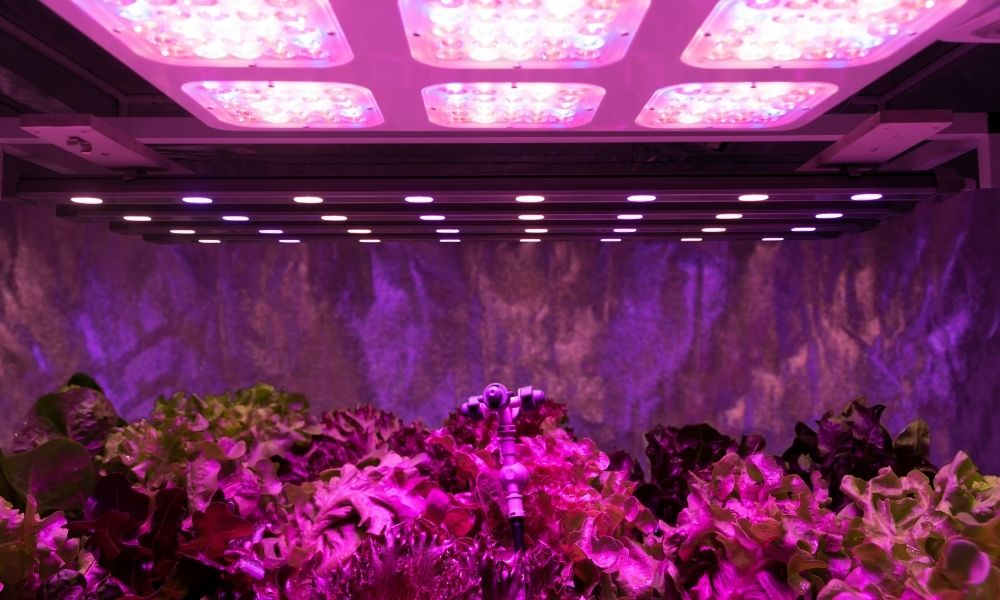 Reasons You Need a Grow Tent for Your Indoor Garden