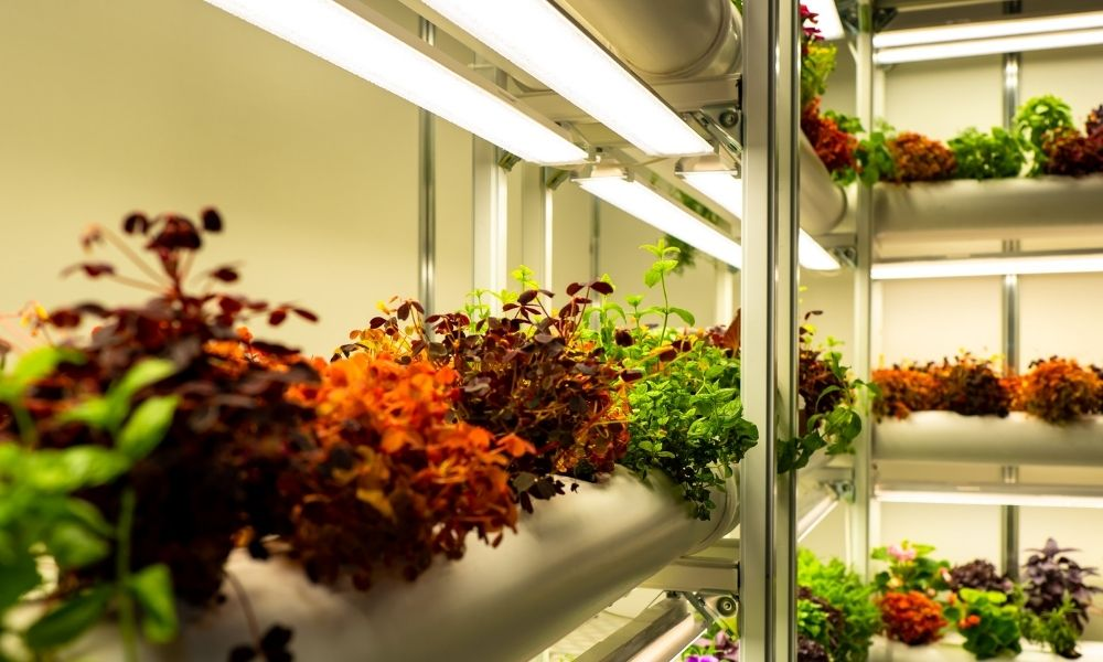 Indoor Garden Checklist: Everything You Need To Get Started