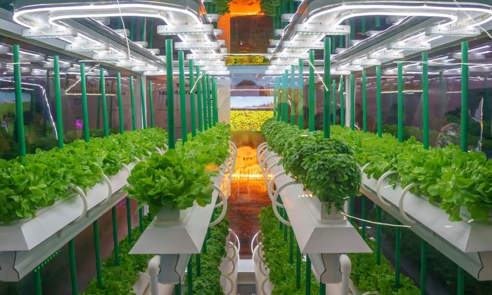 The Basics of Root Care in Hydroponics