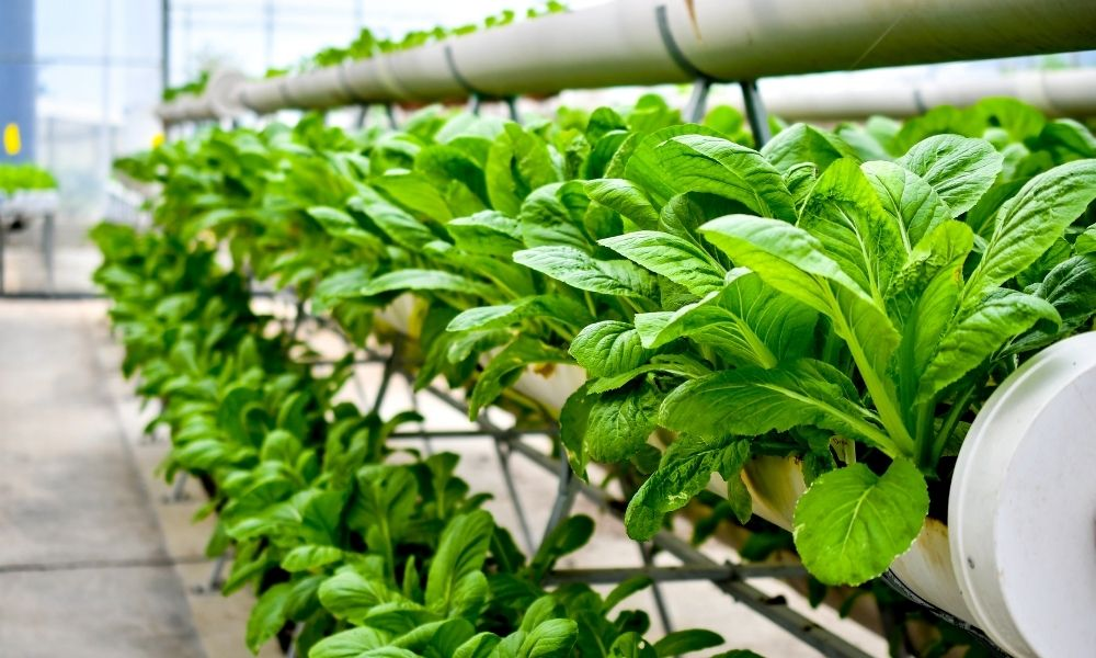 How To Choose the Right Hydroponics System