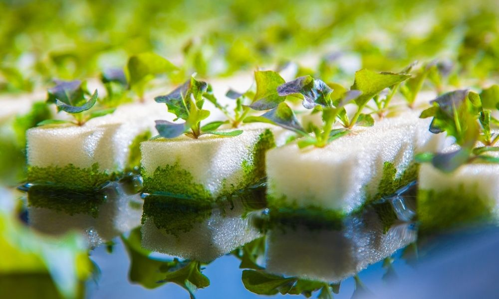 The Impact of Water Quality in Hydroponics