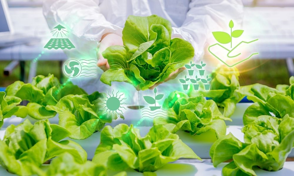 Hydroponic Nutrient Solution: What It Is & Why It's Important