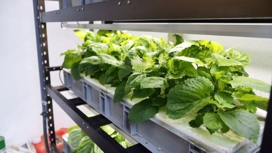 How To Perfect Climate Control in Your Grow Room