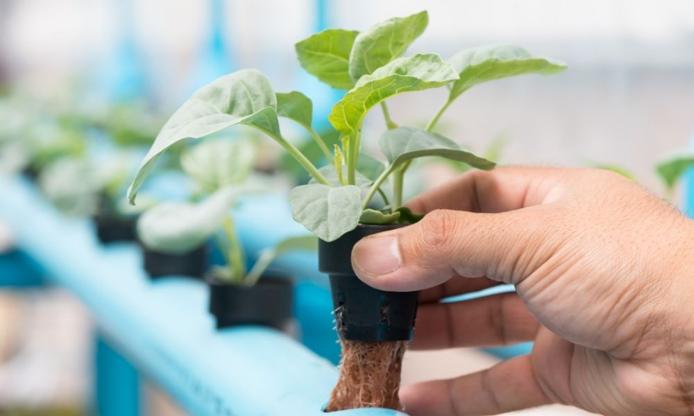 Common Hydroponic Gardening Mistakes Made by Beginners