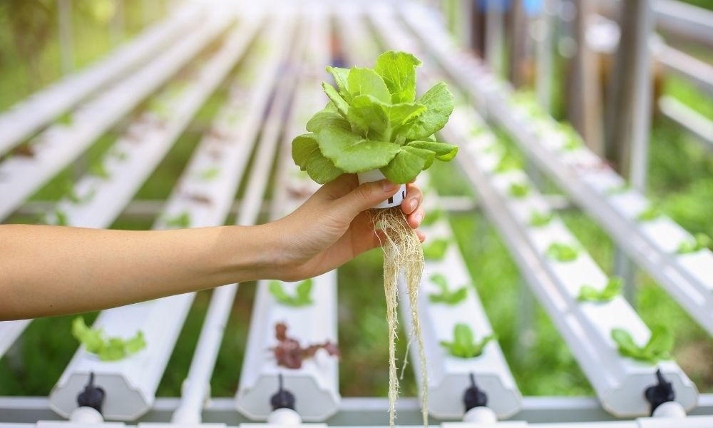 What Nutrients Are Needed for Hydroponics?