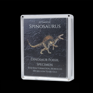 Cretaceous Period Dinosaur Display Specimen Bundle