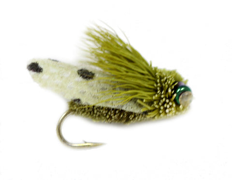 Cicida - Olive Trout Fly