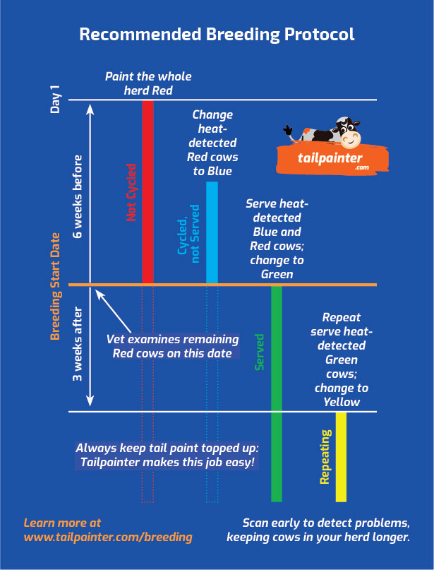 This is an infographic describing the four colour protocol for heat detection using tail paint.