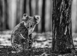 Survivor (Fine Art Print) - by David Yarrow
