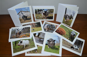 Pig Note Cards
