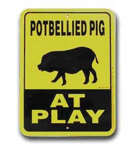 Potbellied Pig at Play
