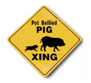 Potbellied Pig Crossing