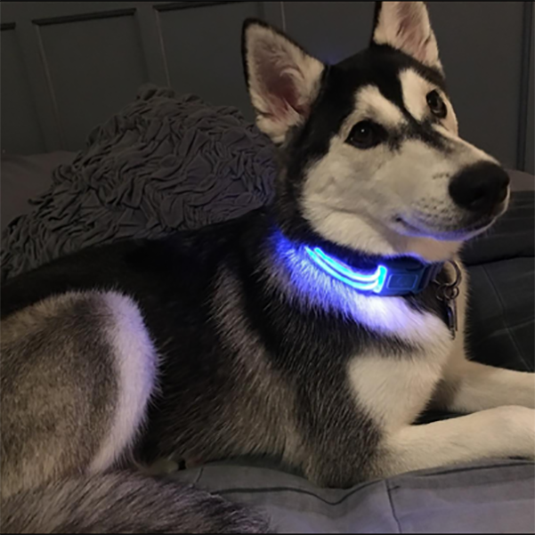USB Rechargeable Dog or Cat LED Flashing Collar Leash(BUY 1 GET 2ND 10% OFF)