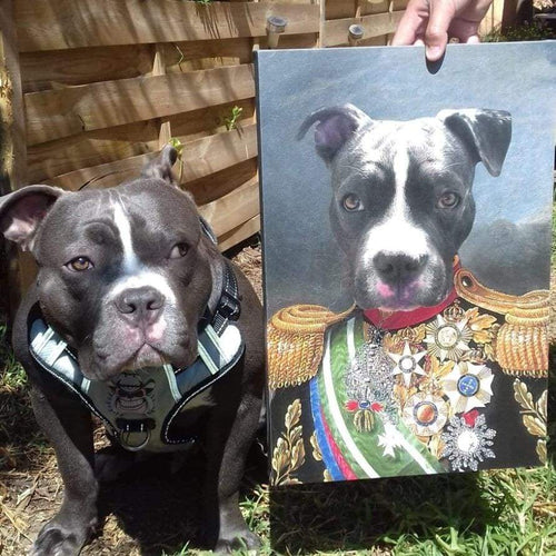 Supreme Commander - Custom Pet Canvas