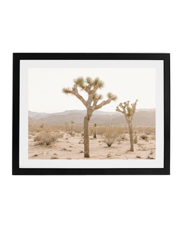 Two Joshua Trees