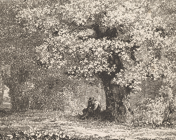 Man Sitting Under a Tree in Bloom