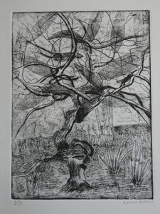 'Twisted Tree' Etching by Lynn Curry