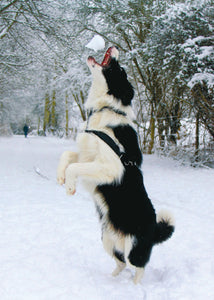 "Barking! ""Snowball flight"" card"