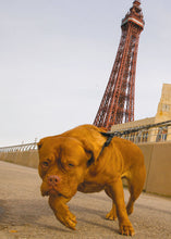 Load image into Gallery viewer, 'Blackpool Rocks!' - Birthday Card