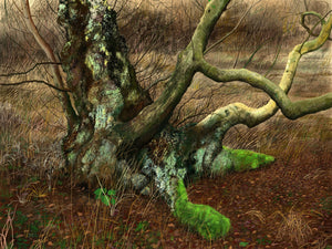 Holme Fen - 'Birch 3 ' by David Lewis