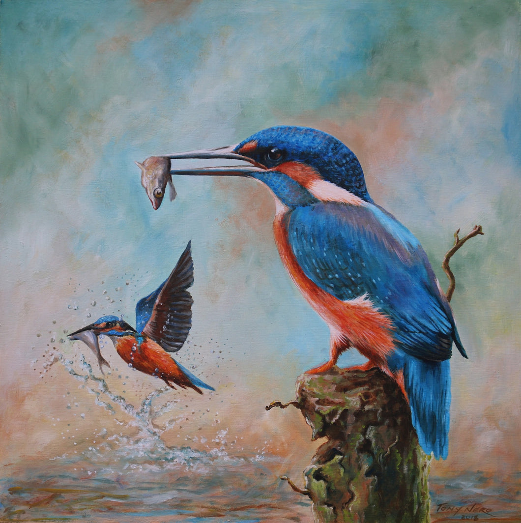 Kingfisher mounted Giclee print by Tony Nero