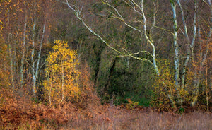 'Holme Fen, Autumn' by Bob Davis