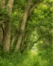 Load image into Gallery viewer, 'Mosquito Alley, Woodwalton Fen' by Bob Davis