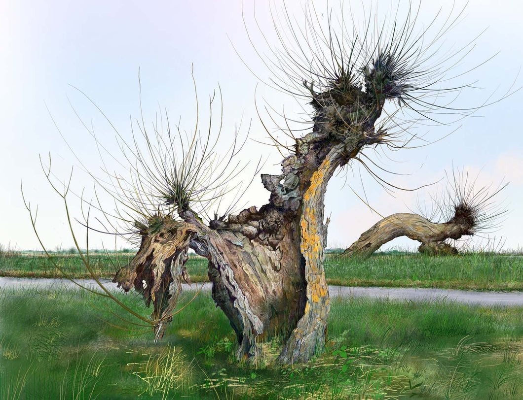 'Whittlesey Washes - Willow 3' by David Lewis