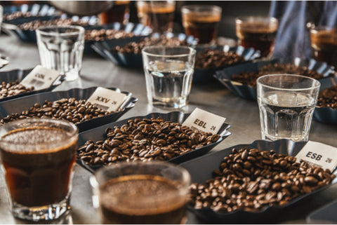 Cupping room trays of freshly roasted coffee beans at the Peet's Roastery