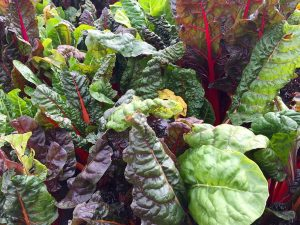 leafy greens contain bone building minerals