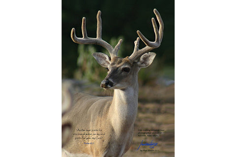 "Wildlife: 24"" x 36"" Canvas Print  ""Deer - Psalms 42:1"""