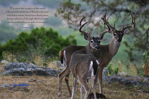 "Wildlife: 24"" x 36"" Canvas Print  ""Deer – Romans 1:20"""