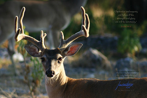 "Wildlife: 24"" x 36"" Canvas Print  ""Deer - Psalms 96:6"""