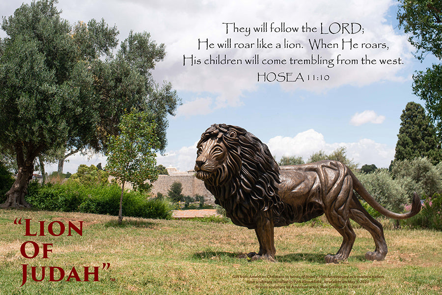 "Lion of Judah-Blumfield Park, Jerusalem 24""x36"" Canvas Print"