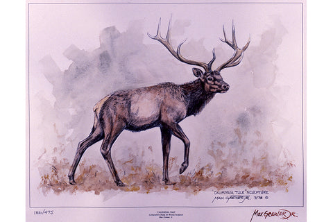 "Wildlife: Drawing Print  ""California Tule"" (Elk)"