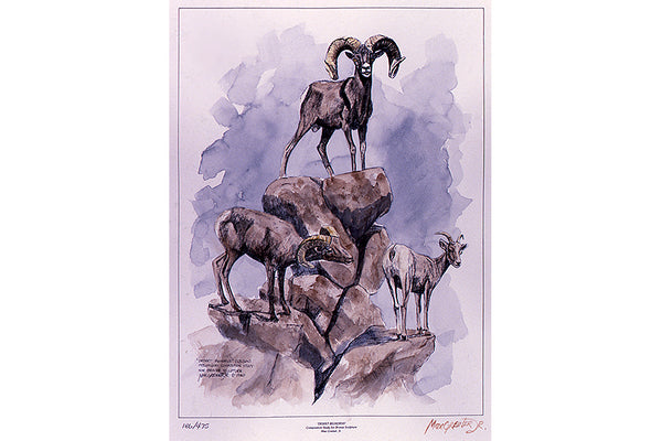 "Wildlife: Drawing Print  ""Desert Bighorn"" (Desert Sheep)"