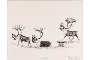 "Wildlife: Drawing Print ""Barren Ground"" (Caribou)"
