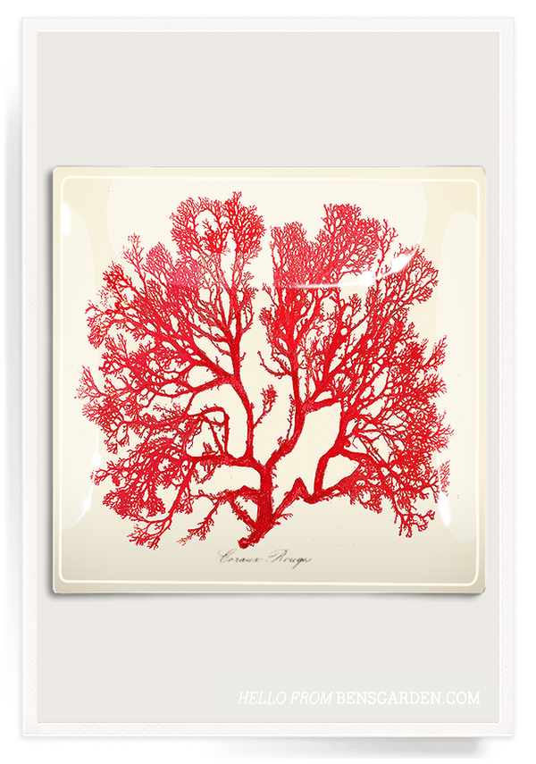 Bensgarden.com | Red Sea Fan Decoupage Glass Tray - Bensgarden.com